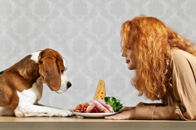 Foto Bisogni nutrizionali del cane: Carboidrati