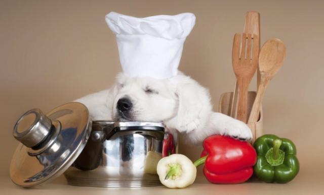 Foto Cibo vegano per cani vegetariani