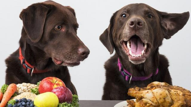cibo vegetariano cane