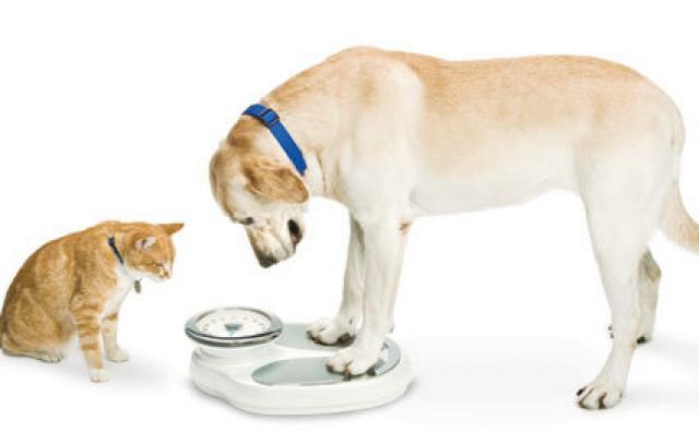 perdita di peso e aumento dell appetito nei cani