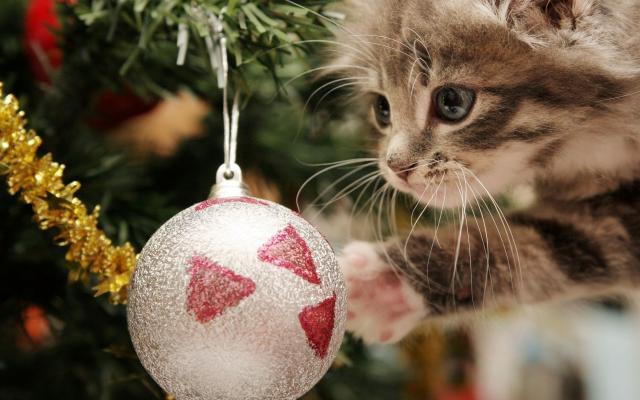 Foto Gatti e Natale: alcuni consigli