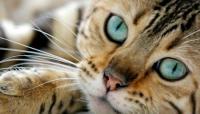 Foto Fibrosarcoma nel Gatto