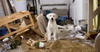 Foto Iperattività nel Cane: cos'è e come trattarla
