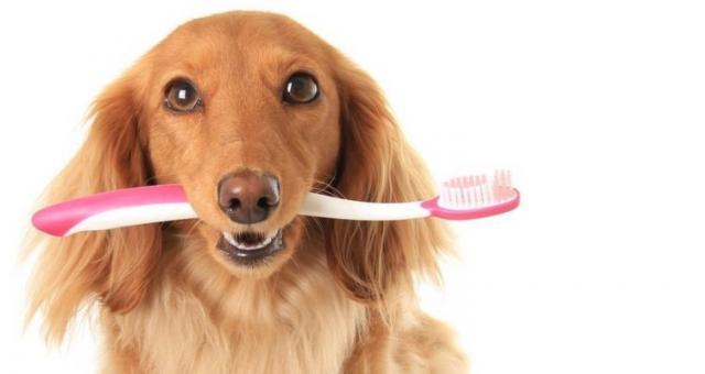 Foto Problemi ai denti nel Cane? Sintomi e cure