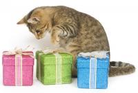 Foto Come si calcola l'età del Gatto?