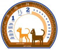 grafico età del gatto in anni umani
