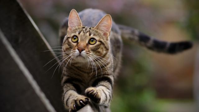 zampe gatto flessibili