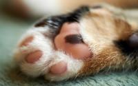 colori zampe gatto