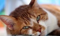 Foto 5 problemi agli occhi nel Gatto