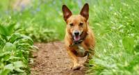 difese immunitarie cane