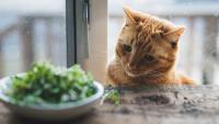 Foto Quali verdure può mangiare il Gatto?
