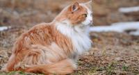 Foto Il Gatto ha il pelo grasso: cause e rimedi