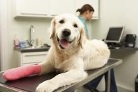 Foto Il cane zoppica: cause e rimedi