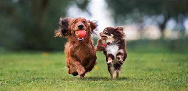giochi vinile cane