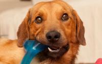 Foto Giochi in vinile per Cani: sono tossici?
