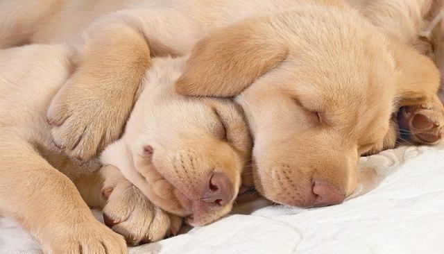 cucciolo dormono abbracciati