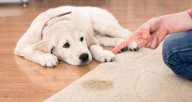 cane che urina più frequentemente del normale