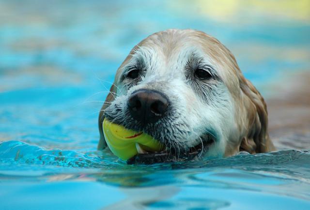 Foto Insegnare a nuotare al cane