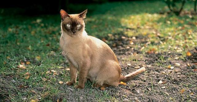 Come allontanare i gatti randagi mondopets