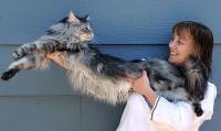Foto 12 Razze di Gatti più grandi del mondo