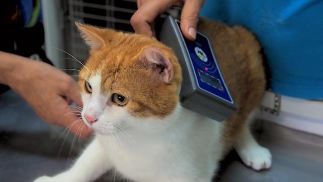Foto Microchip per Gatti: alcuni consigli