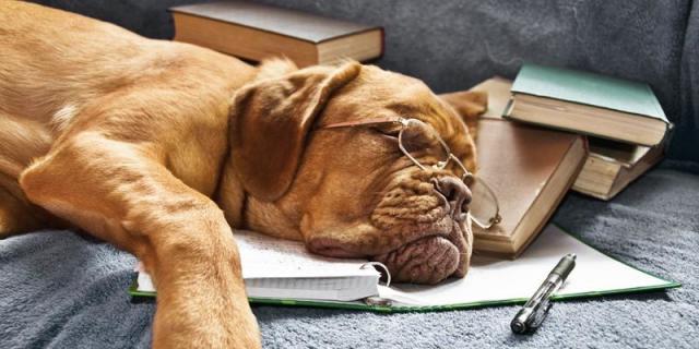 Foto Cosa riduce l'aspettativa di vita dei cani?