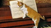 Foto Musica per gatti: quali canzoni amano i gatti?