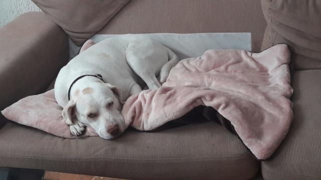 Foto Collasso tracheale nel Cane: cause e trattamento