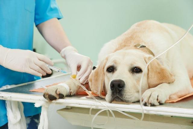 Foto Anestesia Cani: pericoli e risveglio