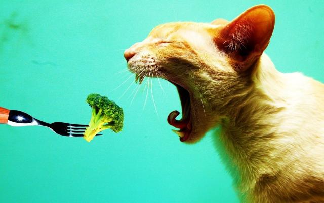 gatti vegetariani