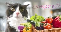 Foto Gatto vegetariano, i gatti possono essere vegetariani?