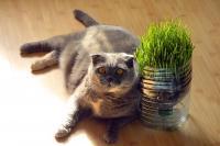 Gatto Vegetariano I Gatti Possono Essere Vegetariani Mondopetsit