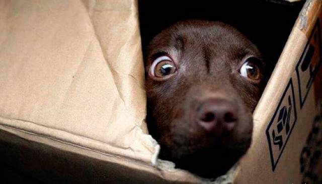 Foto Il Cane può vedere spiriti e fantasmi?