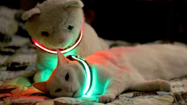 collare luminoso per gatti
