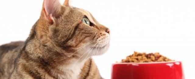 alimentazione gatto con diabete