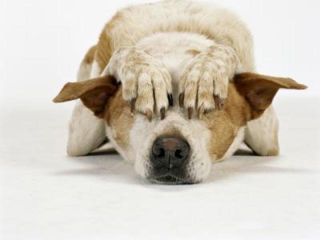 Foto Il Cane è ansioso: cause e cure