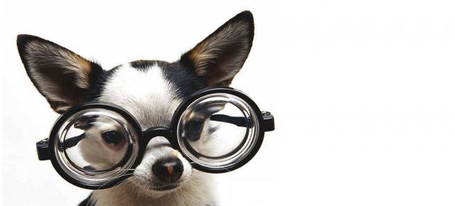 Foto Occhiali per Cani: da sole o da vista?