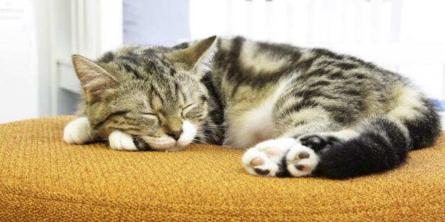 letti per gatti