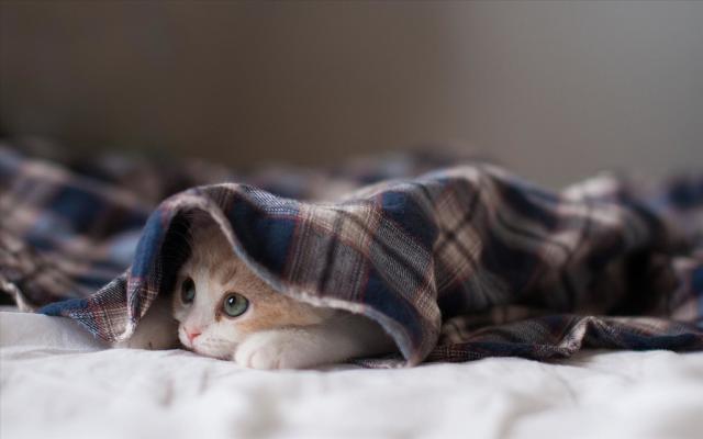 gatto dorme sotto le coperte