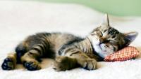 Foto Dove deve dormire il Gatto?