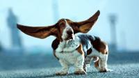 Foto Tagliare coda e orecchie al Cane: le conseguenze