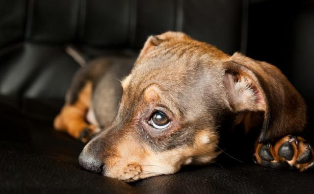 Foto Il mio Cane vomita: cosa faccio?