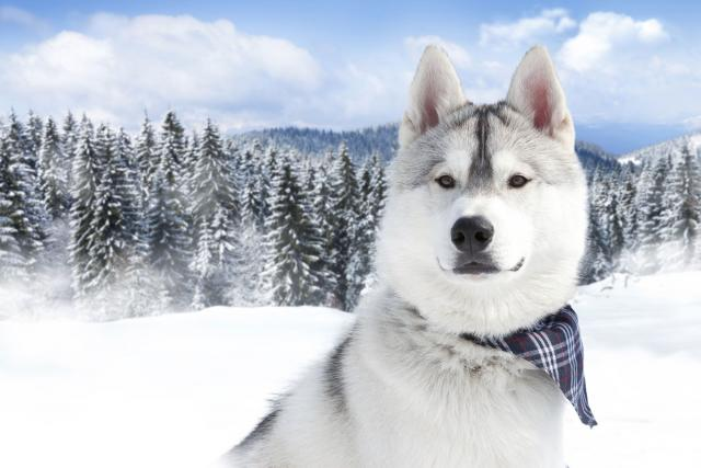 Foto Il mio cane mangia la neve: è pericoloso?