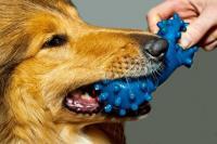 curare parodontite cane
