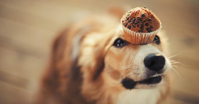 cane cioccolato intossicazione
