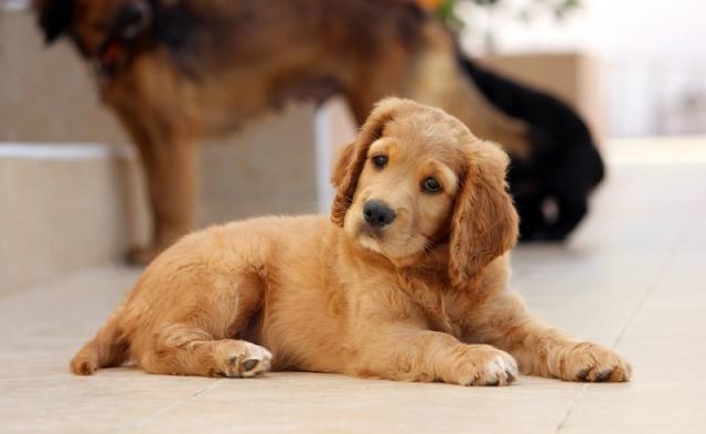 Foto Faringite nel Cane: sintomi e trattamento