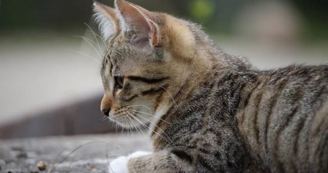 Foto Emorroidi nel Gatto: sintomi, cause e trattamento