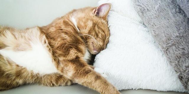 Foto Vaccino per le pulci del Gatto