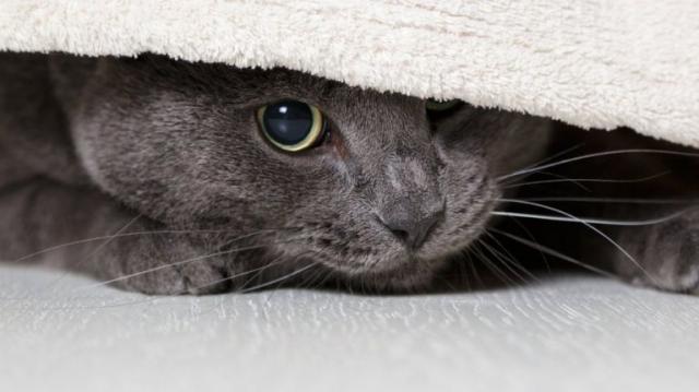 Foto Il Gatto ha paura? Ecco cosa fare