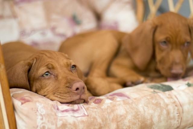 Foto Il mio cane soffre di insonnia?